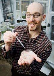 Midge keeps invasive mosquito in check, aiding native mosquitoes