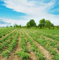 New computing tool could lead to better crops and pesticides say researchers