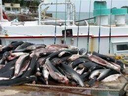 Palau creates world's first shark sanctuary