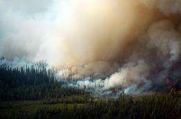 Plants could override climate change effects on wildfires