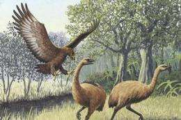 Research backs legend of man-eating bird