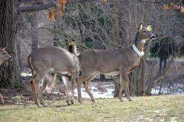 Research explores options for deer population control
