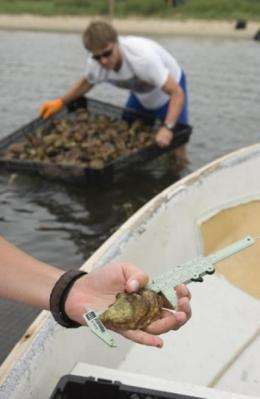 Rising acidity levels could trigger shellfish revenue declines, job losses