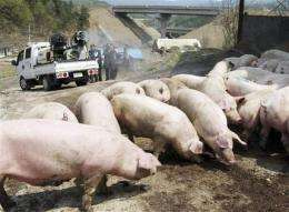 Scramble to stop swine flu spread among travelers (AP)