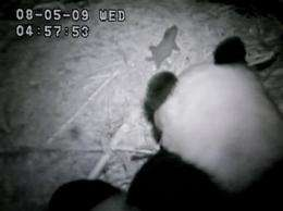 SD Zoo's online Panda Cam crashes due to overload (AP)