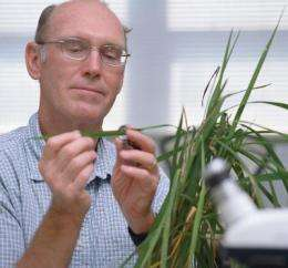 See no weevil: researcher tracks rice bugs to help farmers, consumers