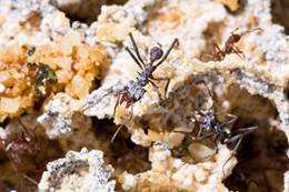 Sequencing effort to chart ants and their ecosystem