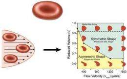 Slipper-shaped blood cells