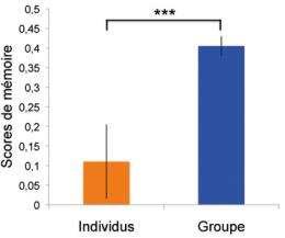 Social memory in Drosophila