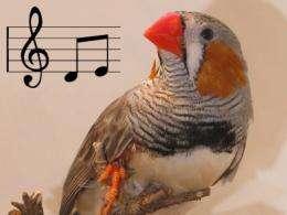 Songbirds reveal how practice improves performance