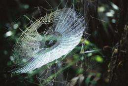 Spider web glue spins society toward new biobased adhesives
