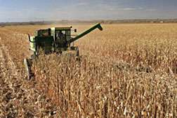 Sustainable Corn Production Supports Advanced Biofuel Feedstocks