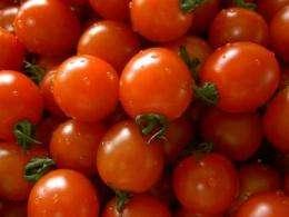 Sustainable fertilizer: Urine and wood ash produce large harvest