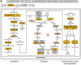Systems biology approach provides insulin resistance insights