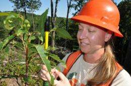 Tennessee foresters helping to return chestnuts to American forests