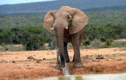 The six elephants in Sierra Leone were shot and