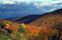This could be an awesome year for fall foliage, expert says