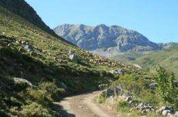 Transhumance helps vulture conservation