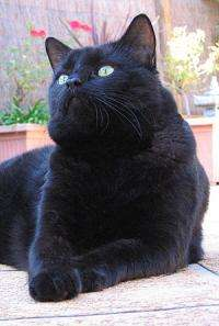 UQ study reduces euthanasia rates of cats