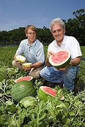 Watermelon: Fruit on the Fast Track