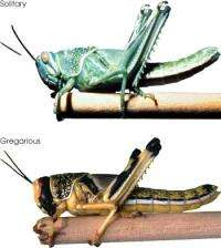 With an Eye on Locusts and Vegetation, Scientists Make a Good Tool Better