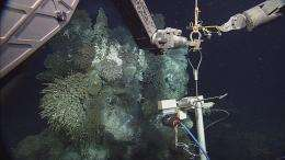 Explore underwater volcanoes, seafloor hot springs and methane ice
