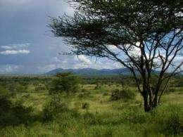 6 million years of savanna