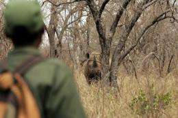 A warden watches a rhinoceros in South Africa in 2004
