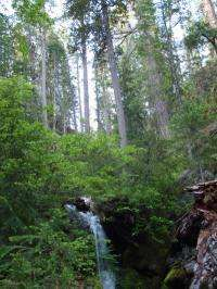 Bedrock nitrogen may help forests buffer climate change, study finds