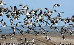 Migratory birds don't train for migrations