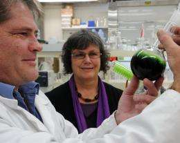 New sustainable 'bio-derived' jet fuel industry is achievable