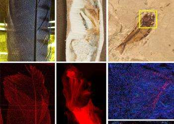 Pigment patterns from the prehistoric past: X-ray technique reveals fossil pigmentation