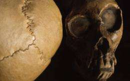 Researchers consider ancestry of recent fossil finds