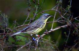 Satellite data shows that Kirtland's warblers prefer forests after fire