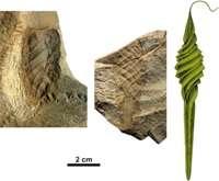 Teeny teeth indicate ancient shark nurseries