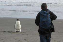 The Emperor penguin, nicknamed
