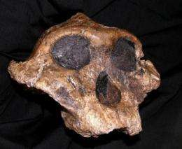 New technologies challenge old ideas about early hominid diets