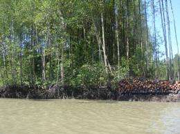Mapping mangrove biomass