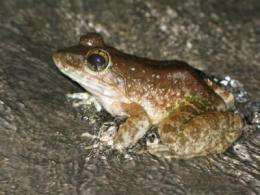 Researchers complete first major survey of amphibian fungus in Asia