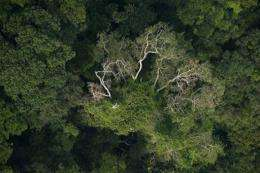 Aerial view of a forest in the state of Para, northern Brazil, in 2009