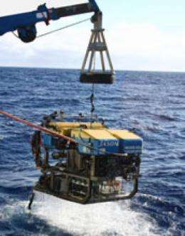 'Fool's Gold' from the deep is fertilizer for ocean life