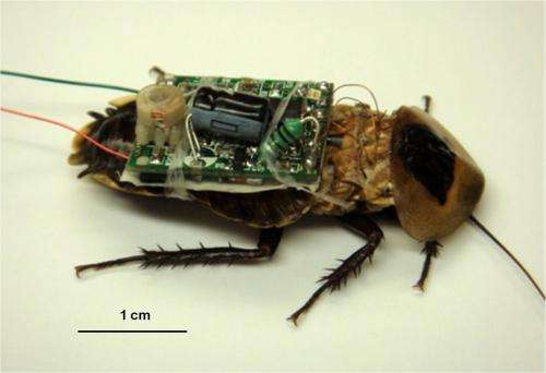 Researchers hope to use bugged bugs for search and rescue
