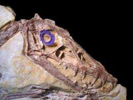 The eyes have it: Dinosaurs hunted by night
