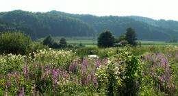 Biodiversity must be restored