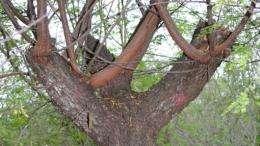 Caatinga biomass estimation