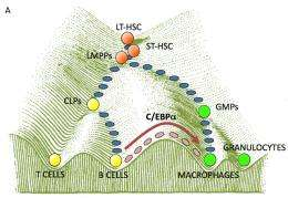 Cell Transformation a la carte