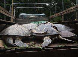 6 Chinese charged for turtle catch in Philippines (AP)