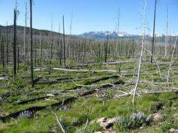 Climate-change-induced wildfires may alter Yellowstone forests