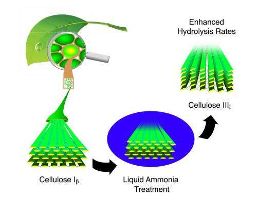 Researchers find potential key for unlocking biomass energy