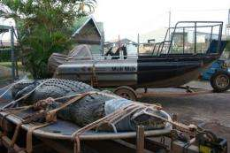 A 4.5-metre-long crocodile caught at Corroboree Billabong in Mary River National Park near Darwin